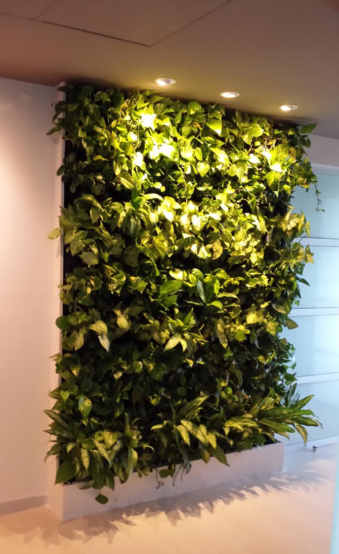 Jardin vertical despacho salas y salas puerto cancun for Plantas utilizadas en jardines verticales
